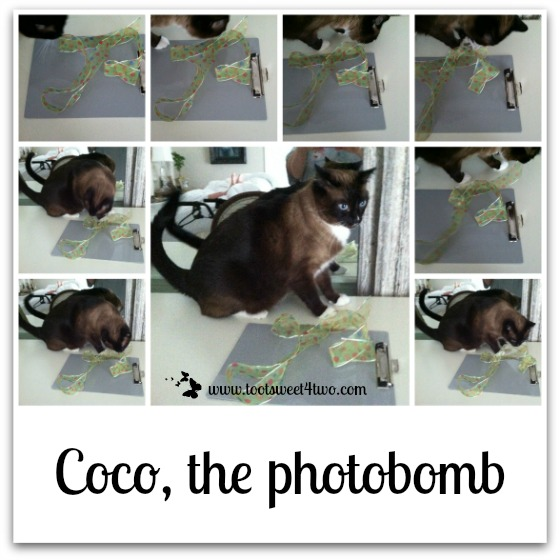 Coco, the photobomb - Grocery List Clipboard