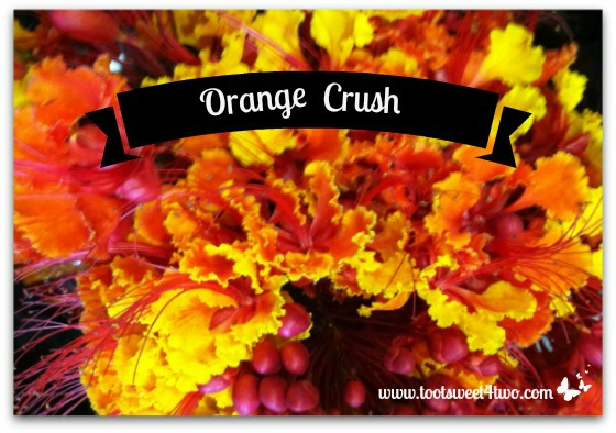 Mexican Bird of Paradise - Orange Crush