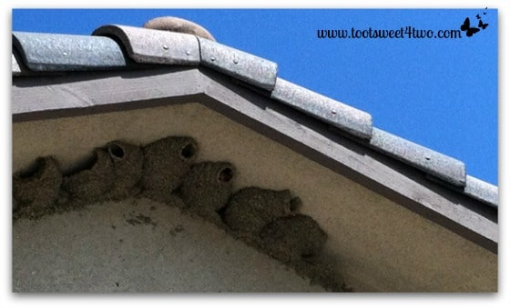 Cliff Swallow nests above the kitchen nook window - Exaltation of Larks