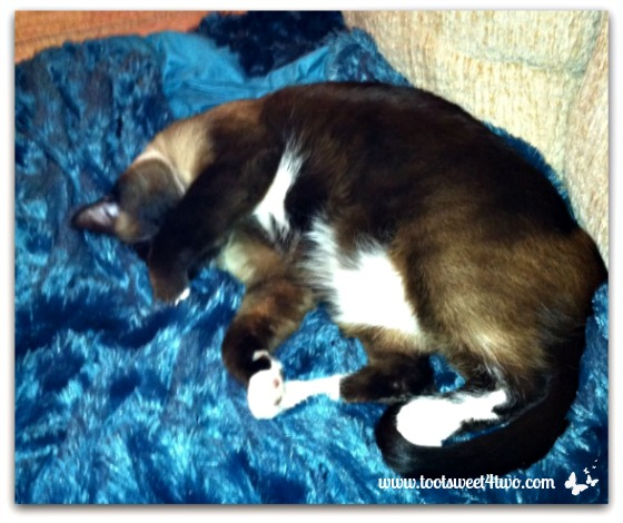 Coco on blue Z Gallerie blanket - The Squish Factor