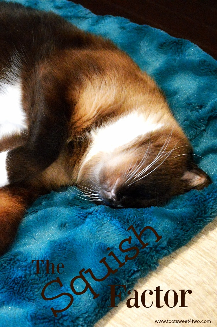 Coco on squishy blue blanket - The Squish Factor