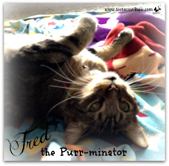 Fred the Purr-minator