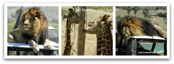 San Diego Zoo's Safari Park - 42 Things to do in San Diego