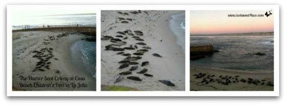 Seal Beach Collage - 42 Things to do in San Diego