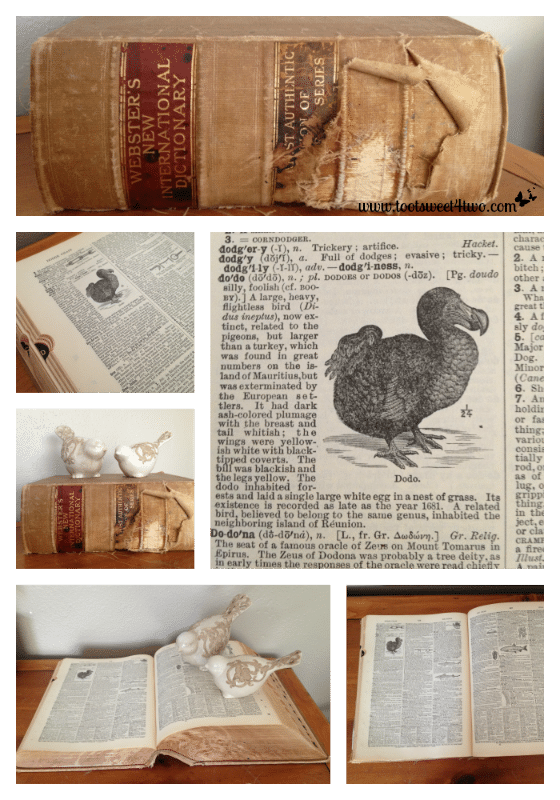 Dodo Bird Dictionary collage - By Way of the Dodo Bird
