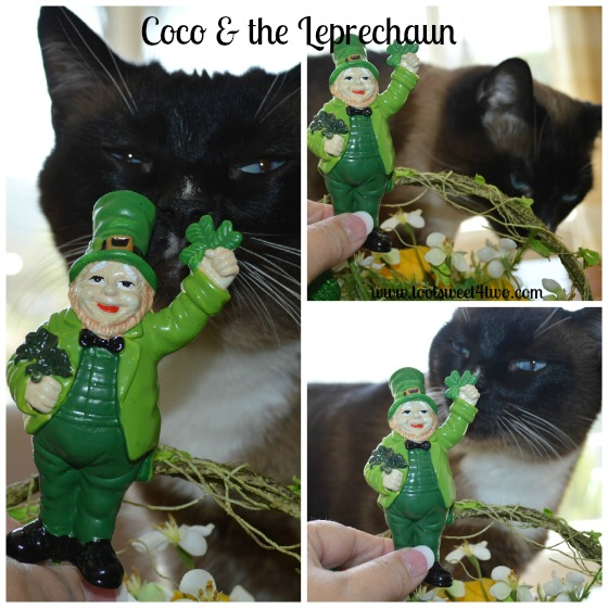 Coco and the Leprechaun Centerpiece