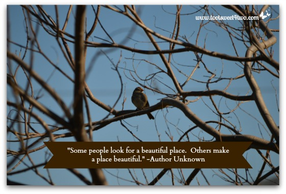 Bird in one of my trees
