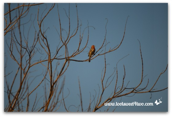 And yet another bird in yet another tree!