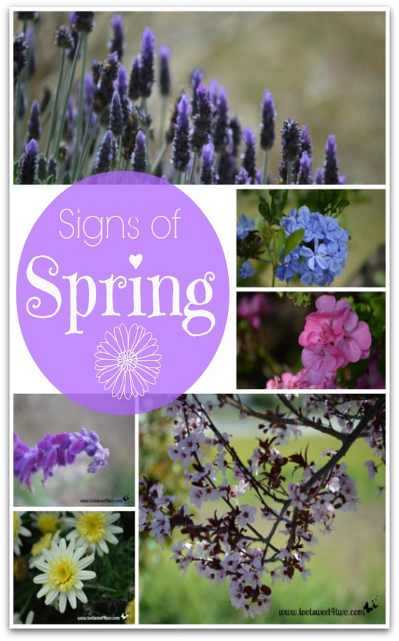 Signs of Spring Collage