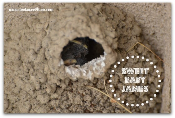 Sweet Babies-Swallows