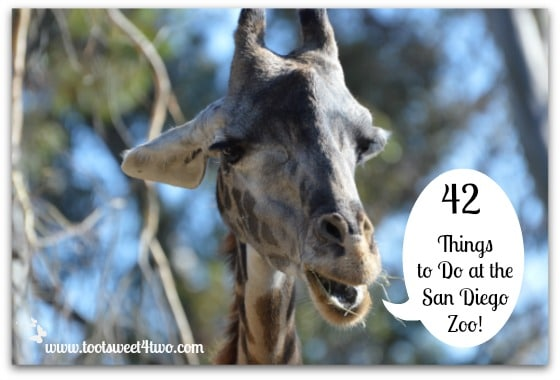 42 Things to Do at the San Diego Zoo