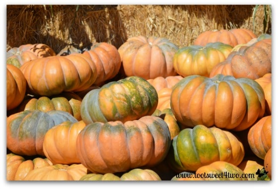 Fairytale Pumpkins in the pumpkin patch