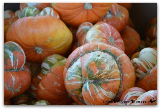 Gourds and pumpkins in a box
