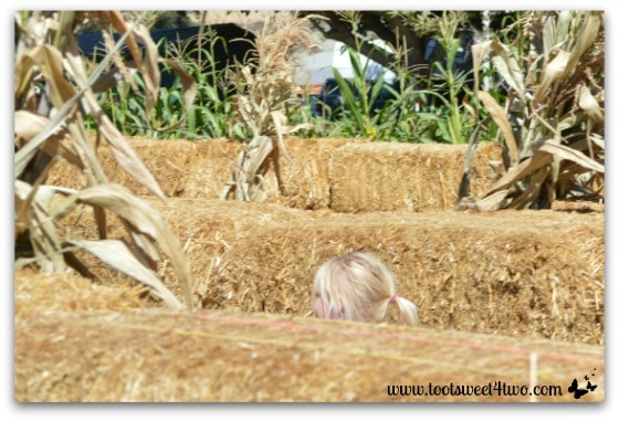 Little head above the Straw Maze