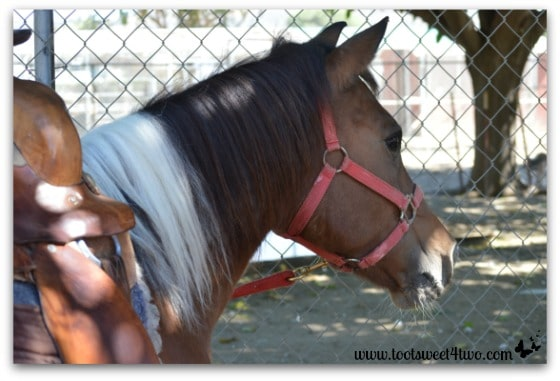 Princess Sweetie Pie's pony