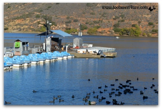 The boat dock and the American coots at Lake Poway