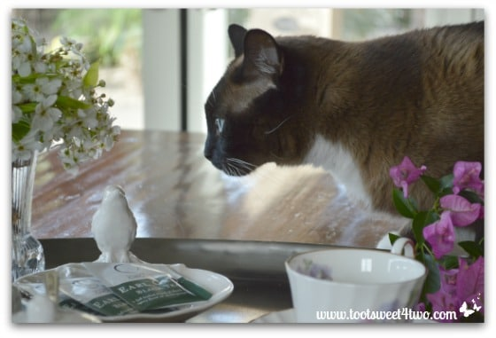 Coco checking out the ceramic bird - Picture Perfect