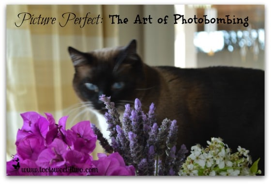 Coco sniffing flowers - Picture Perfect cover