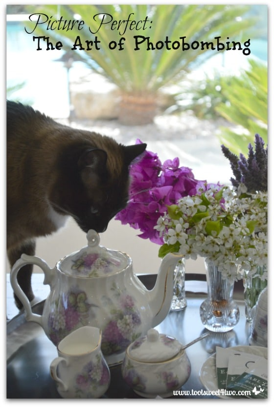 Coco sniffing tea pot - Picture Perfect