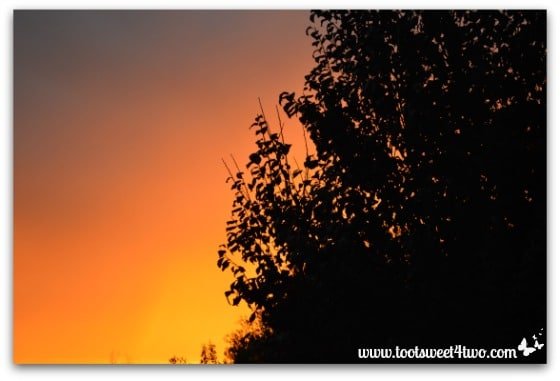 Picture 7 - Fire in the sky beyond the plum tree - November 23, 2013