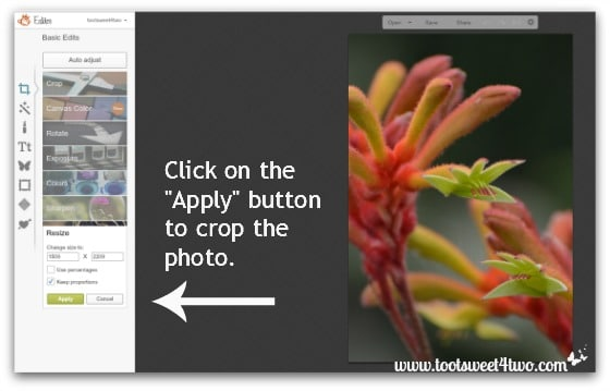 Click on Apply in PicMonkey