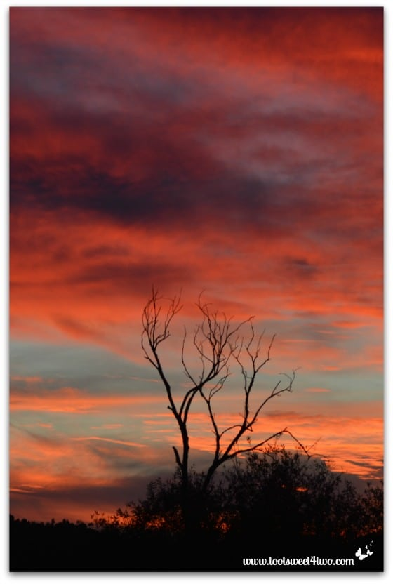 Sunset with skeleton tree in my valley - Saving Mr. Lincoln's Retirement