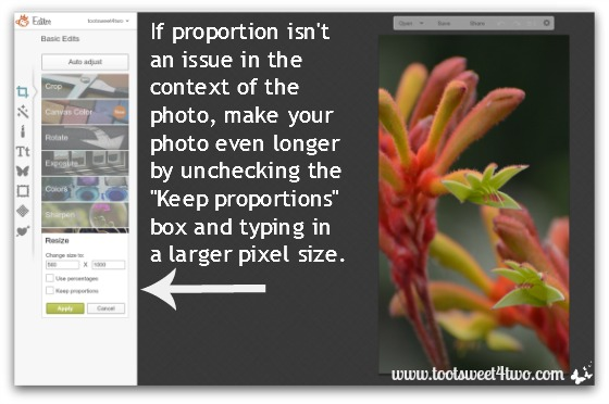 Uncheck the Keep Proporations box in PicMonkey
