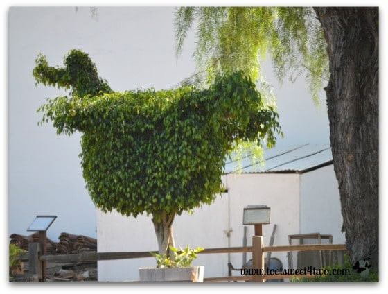 Dodo Bird topiary at San Diego Mission de Acala - 42 Shades of Green