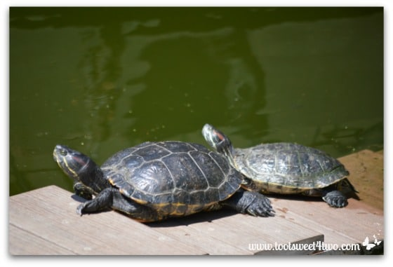 Turtles sunbathing near a green pond - 42 Shades of Green