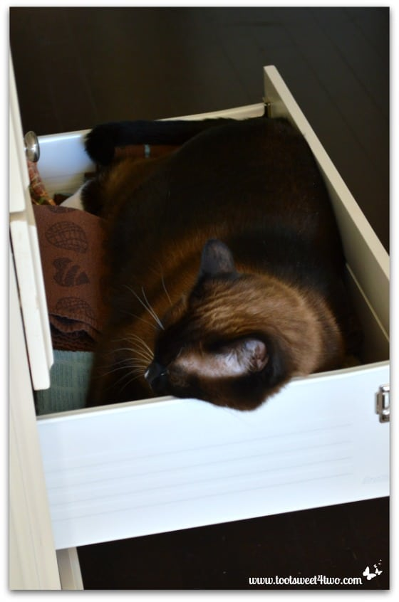 Coco asleep in the kitchen towel drawer