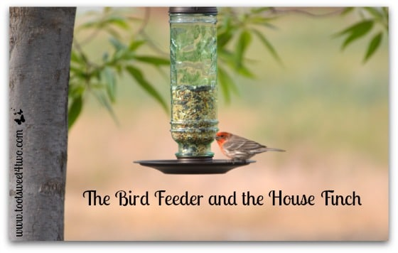 The Bird Feeder and the House Finch cover