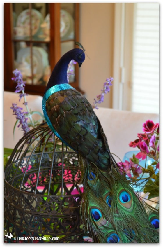 Peacock on top of a birdcage for the Peacock table