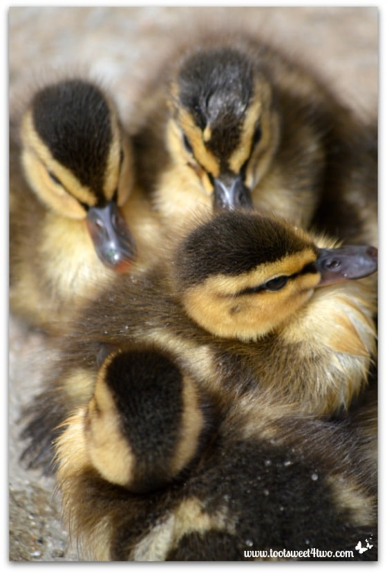 Baby ducklings huddled together - Things I've Learned in 2 Years of Blogging
