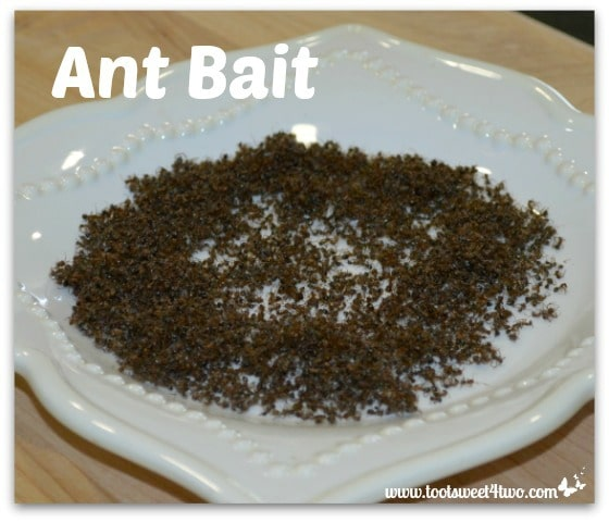 Dead ants on a plate - Ant Bait