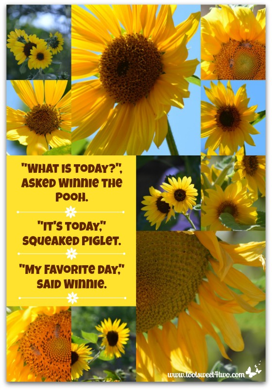 PicMonkey Basics - Collage - My Favorite Day