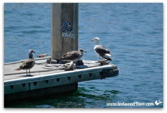 Seagulls and graffiti - Oceanside Harbor