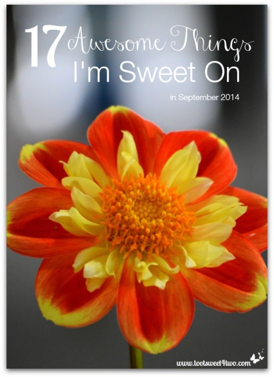 17 Awesome Things I'm Sweet On in September 2014 cover