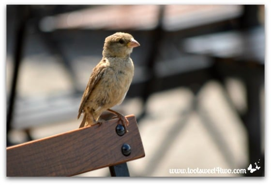 Bird on a bench at Canalside