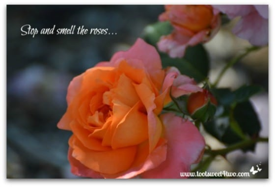 Stop and smell the roses - 3 Actionable Tips for Organizing Anything