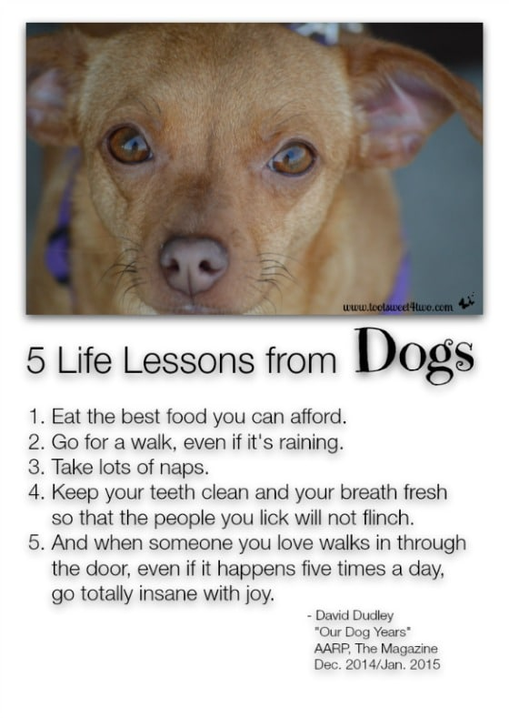 5 Life Lessons from Dogs