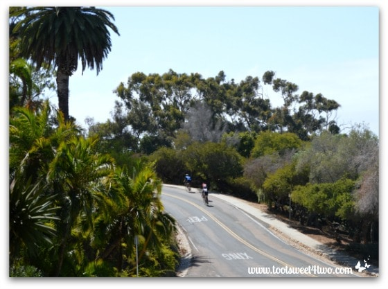Cyclists in Presidio Park, San Diego