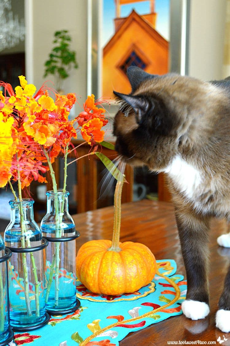 Coco sniffing the Red Mexican Bird of Paradise flowers