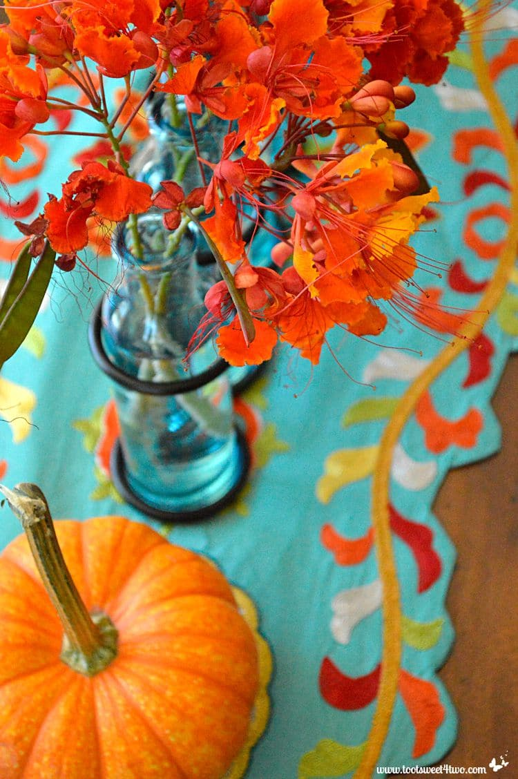 Turquoise runner and orange mini pumpkin and Red Mexican Bird of Paradise