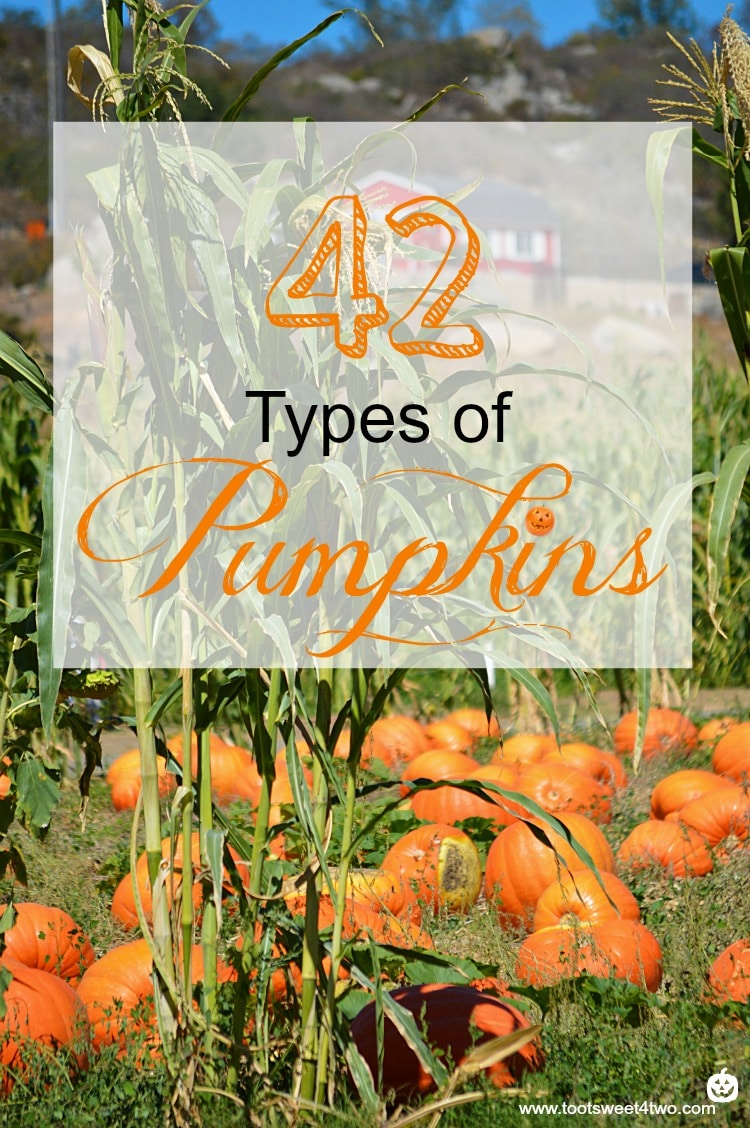 42 Types of Pumpkins cover
