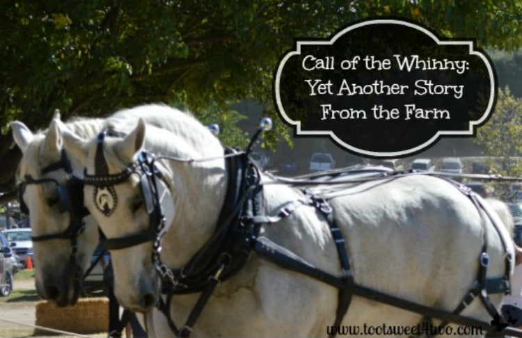 Call of the Whinny 750x486