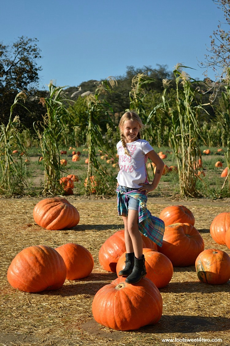Princess P standing on a Big Mac Pumpkin at Bates Nut Farm