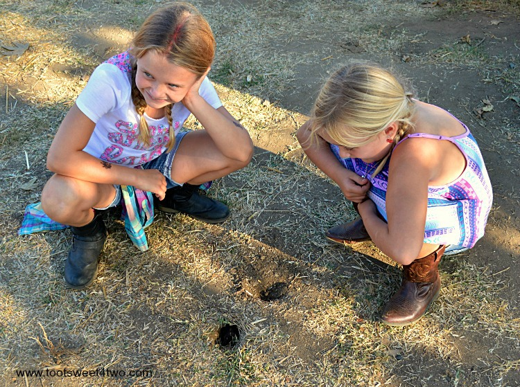 Princesses P looking at a gopher hole at the pumpkin patch