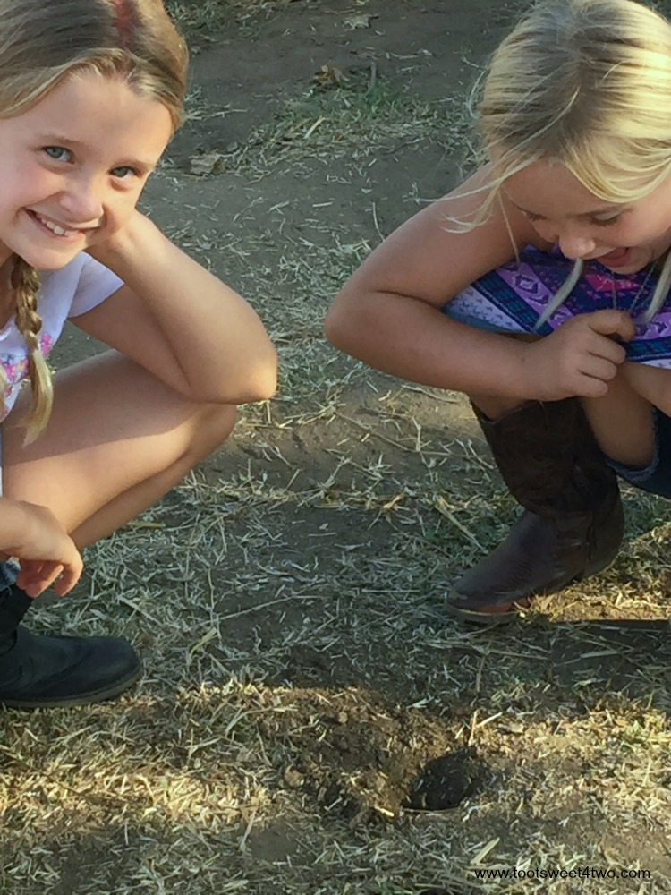 Princesses P see movement in the gopher hole at the pumpkin patch