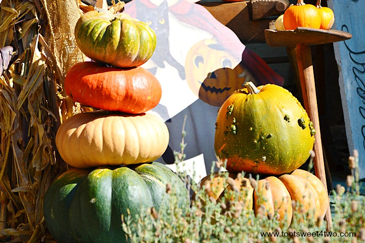 Pumpkins stacked in a garden display