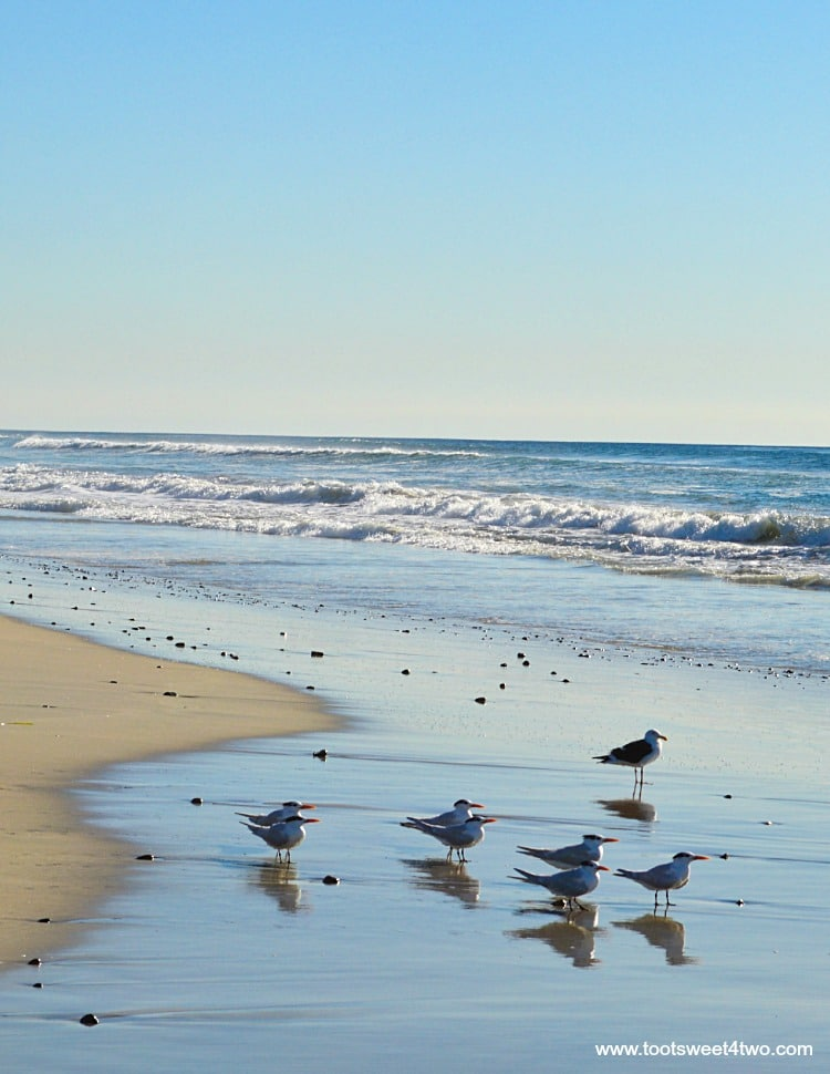 Seagulls on the beach at the gloaming